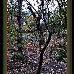 myfoto myedit autunno greennature mycity freetoedit