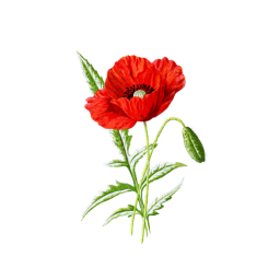 freetoedit red poppy flower