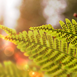 freetoedit fern ferns vern verns day daylight