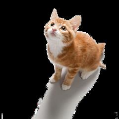 ftestickers stickers cat cute freetoedit