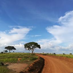 freetoedit africa safari my love