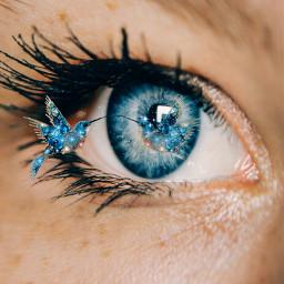 freetoedit eye colibrí surreal ircmagiceye magiceye