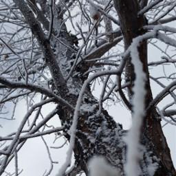 winter snow cold snowyslopes