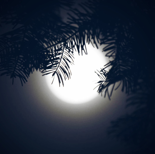 #nature #coldnight #fullmoon #moonlight #whitemoon #brightlight #pinetreebranches #silhouettes #nightpicture #naturephotography   #freetoedit