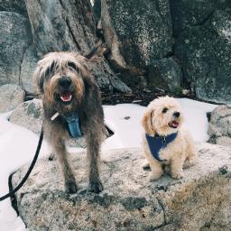 dogs snow freetoedit snowyslopes