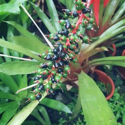 freetoedit plant green iloveplants nature