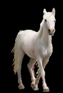 horse animals freetoedit