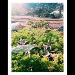 nature naturephotographie leaf