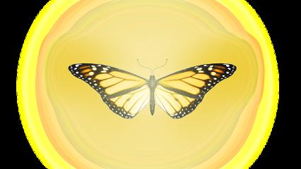 butterfly luminous fantasy nature ftestickers freetoedit