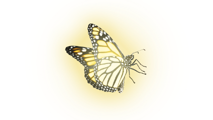 butterfly luminous fantasy nature ftestickers freetoedit