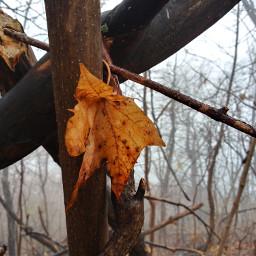 freetoedit forest leaf autumn winter