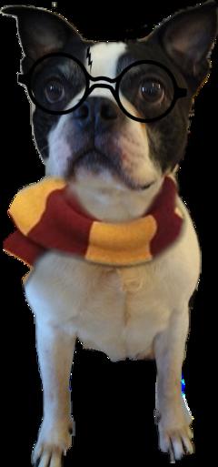 freetoedit scscarf scarf