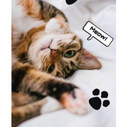 freetoedit pet petlove cat