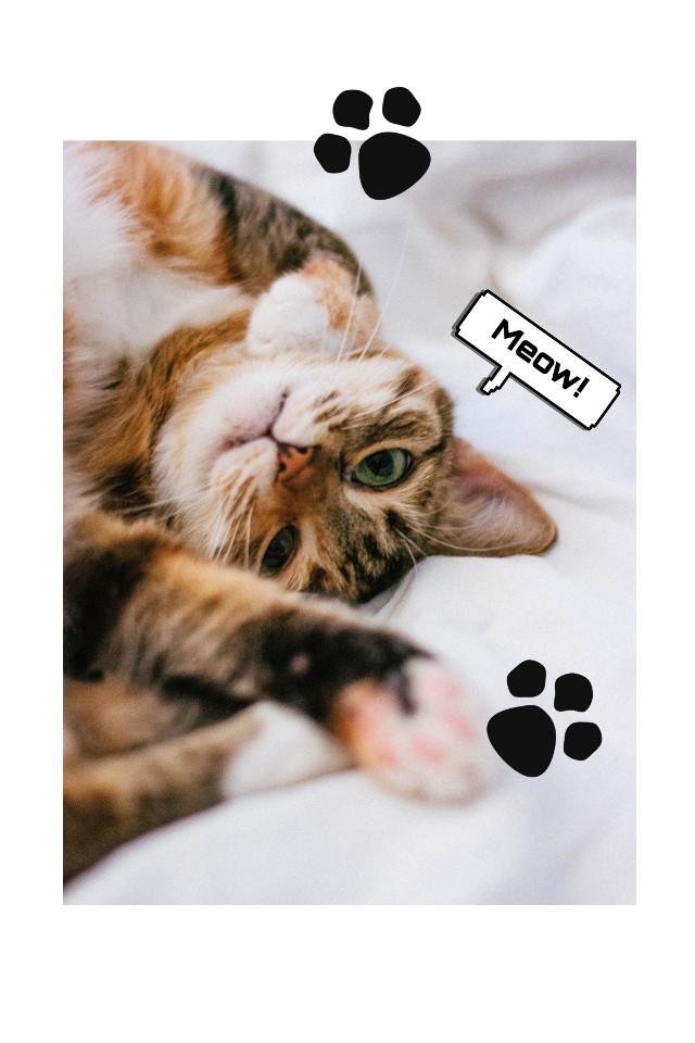 #freetoedit #pet #petlove #cat