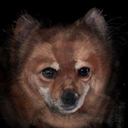 colorpaint draw dog portrait eyes