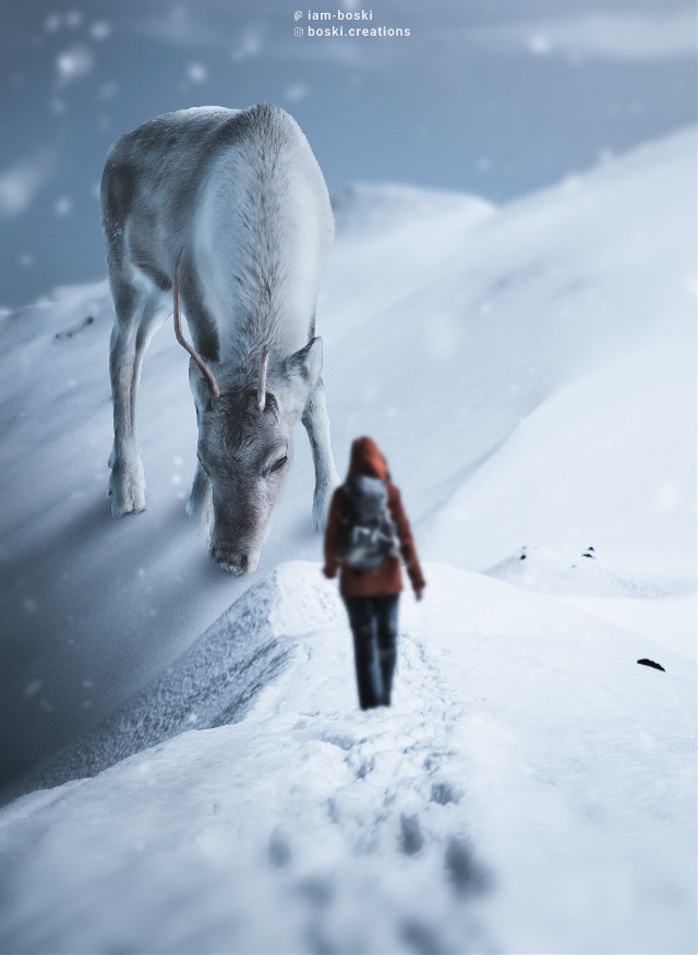 Coming, my friend. 🦌❄      #freetoedit #animal #huge #deer #snow #girl #surrealism #surreal