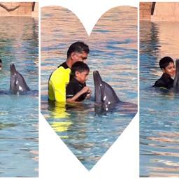 atlantisthepalm dolphinarium