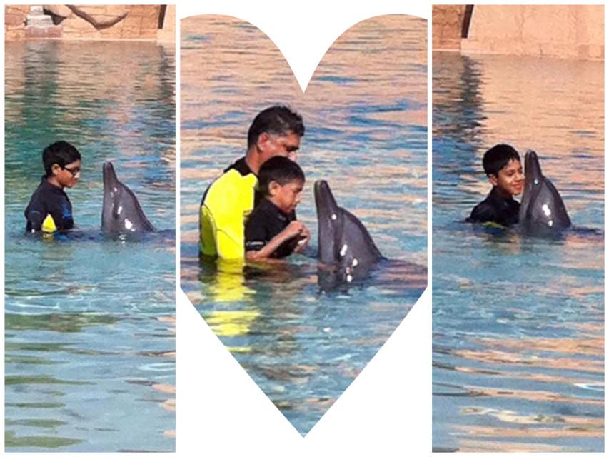 #atlantisthepalm #dolphinarium