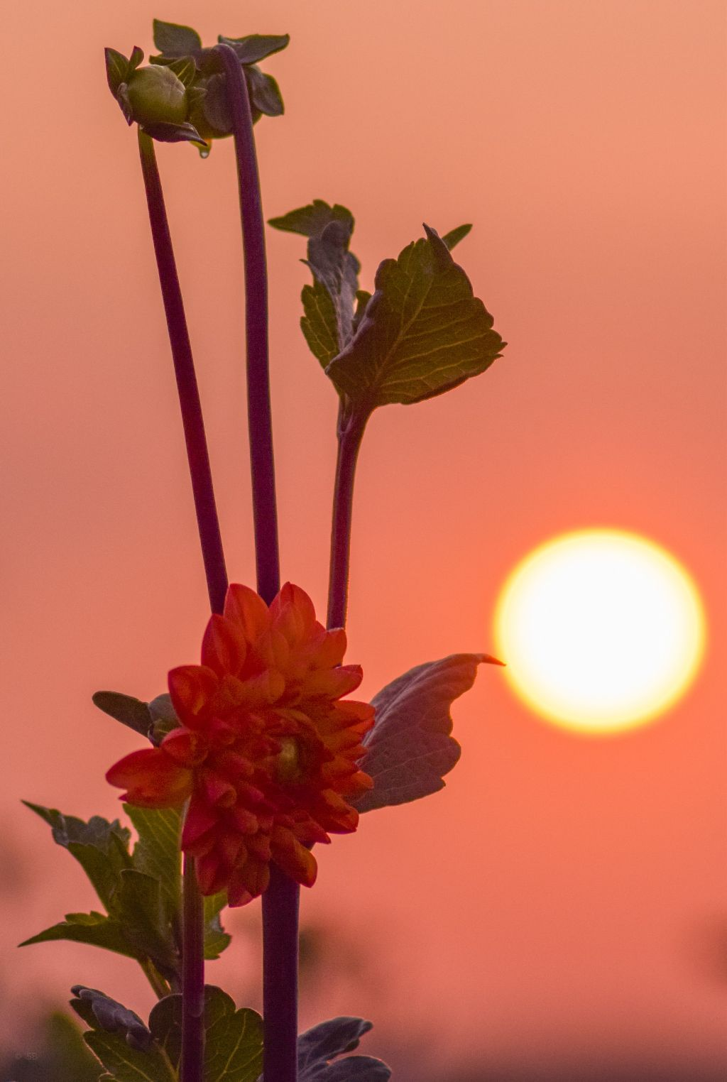 #photograpy #myphoto #picoftheday #flower #morning #sunrise #red  #freetoedit