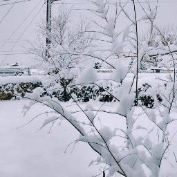 snowday whitechristmas 2016 myic mybackyard