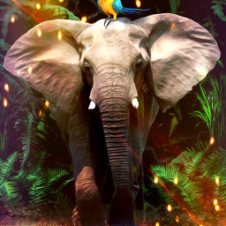 elephant parrot jungle trees lights ircdeepinthewoods freetoedit