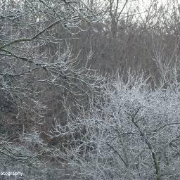 freetoedit followme winter wintertime winterforest