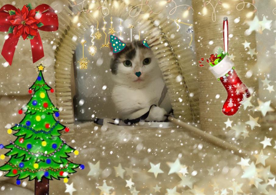 #freetoedit #christmas #christmassticker #cat #christmastree #christmastime #christmasspirit #challenge #editingchallenge #christmaschallenge #snow #glitter #stars #lights  #srcchristmasmask #christmasmask #stickerremixchallenge