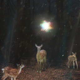 freetoedit forest star deer stickers