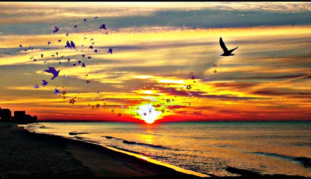 #sunset #sun #sunny #beach #background #remixit #water #birds #sand #nature #clouds #horizon #beautiful