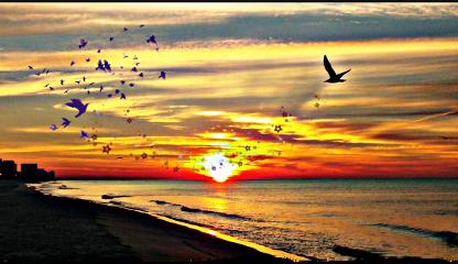 sunset sun sunny beach background