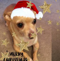freetoedit dogs cute merryxmas2019