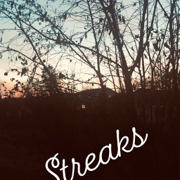 streaks tree sky freetoedit