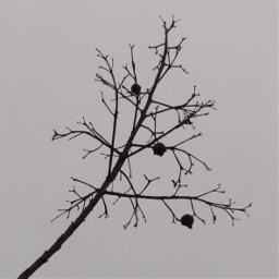 minimalism winter branch cloudy naturephotography freetoedit