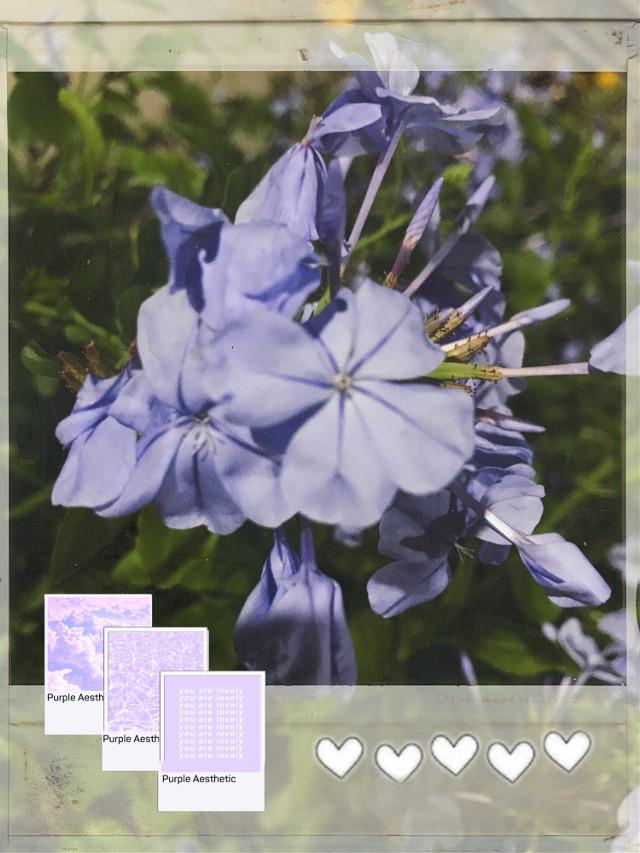 #freetoedit #flowers #flower #flowerphotography #purpleflower #purple #periwinkle #purpleaesthetic #aesthetic