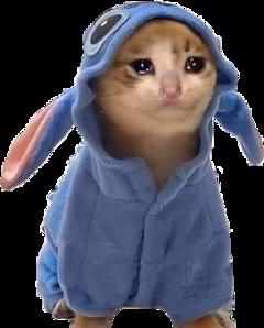 sad sadcat cat kittycat cryingcat freetoedit