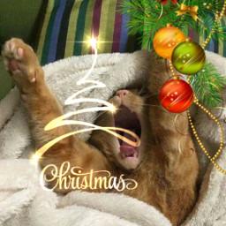 freetoedit ecfestivepets festivepets
