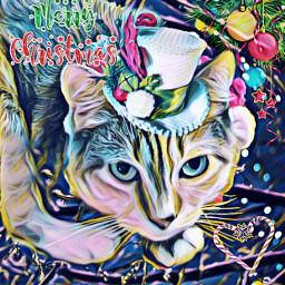freetoedit ecfestivepets festivepets cat kitty