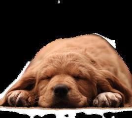 freetoedit puppy cuteanimals dog cutedog