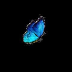 freetoedit butterfly blue bluesky glow
