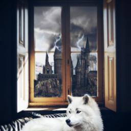 freetoedit vote dog mystery challenge ircwindow window