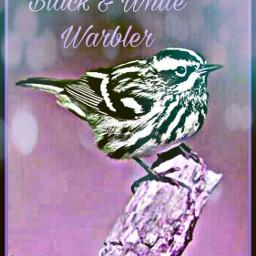 freetoedit warbler bird petsandanimals branch