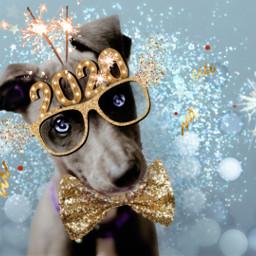 freetoedit animals party dog newyears ecfestivepets
