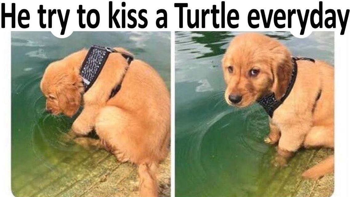 tortle 🐢 #meme #memes #turtle