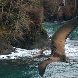 pteranodon pterodactyl sighting shore beach freetoedit