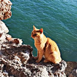 cat catsofpicsart gatitos gato catslover