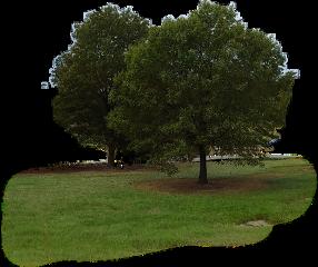 grass lawn green trees tree freetoedit