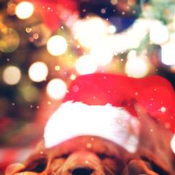 freetoedit sleeping christmaslights christmas_time christmas ecfestivepets festivepets