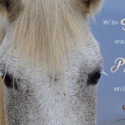 horses horsequotes ilovemyhorse
