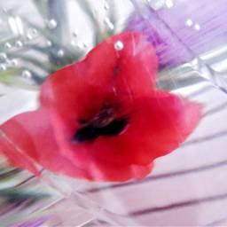 freetoedit poppy abstractart myoriginalphoto noedit