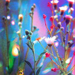 freetoedit springbuds mistypink shadowplay bluesandpinks